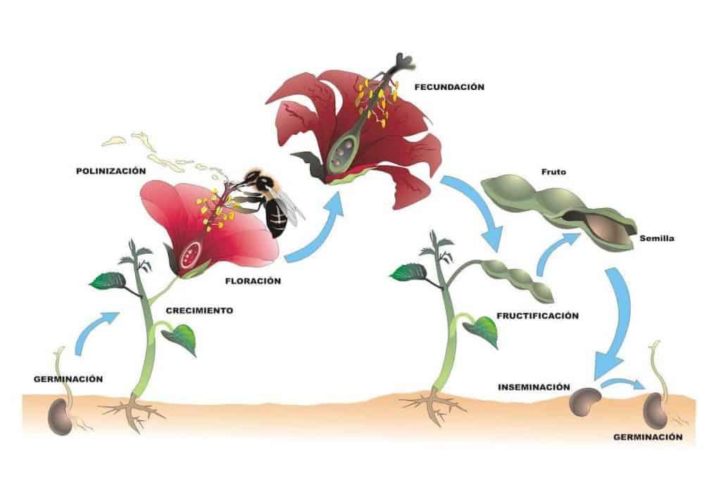 como se reproducen las plantas sexualmente