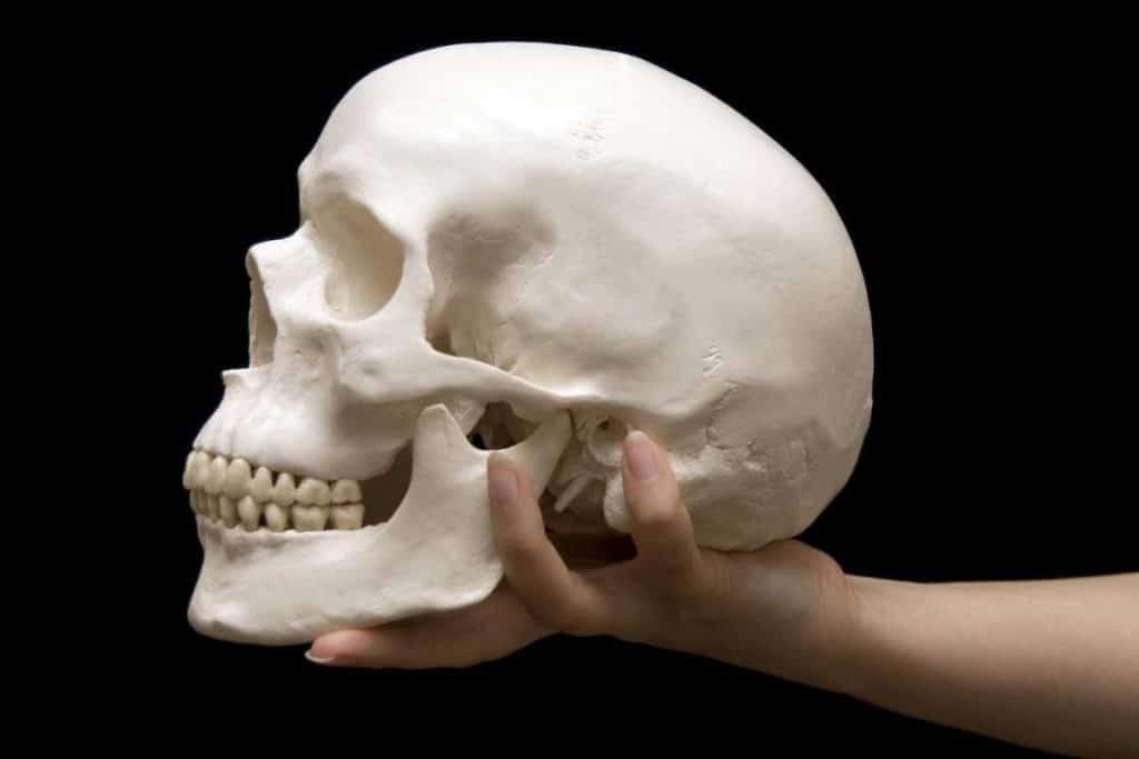 cuantos huesos tiene el cuerpo humano craneo