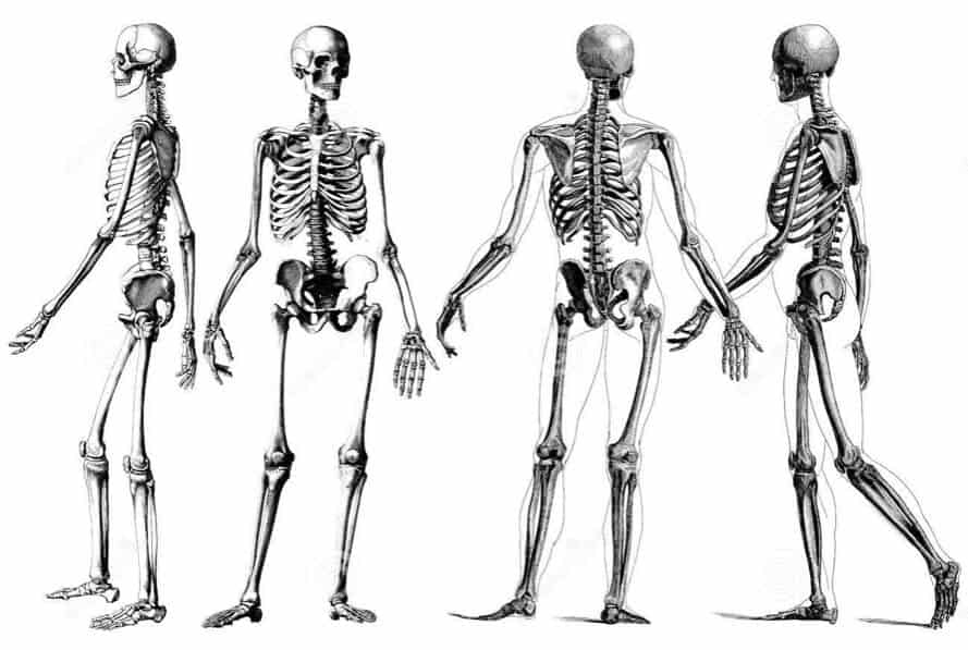 cuantos huesos tiene el cuerpo humano