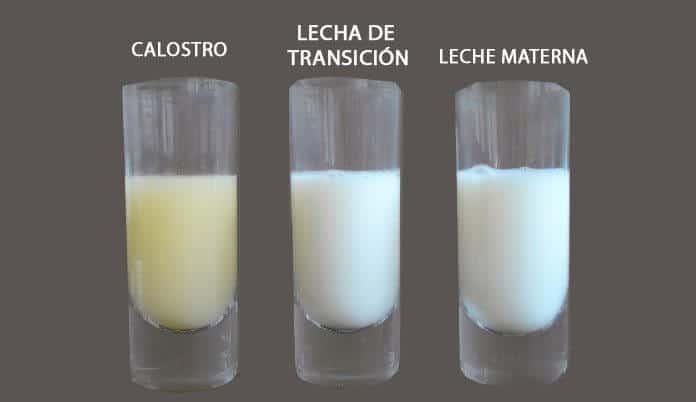 tipos de leche materna contenido nutricional
